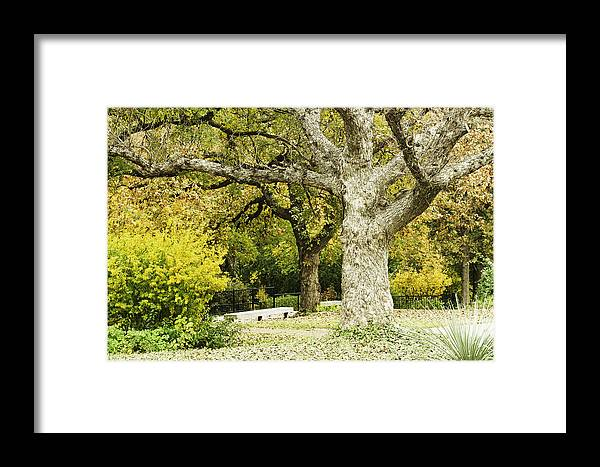 Japanese Gardens Bridge Prints Photographs Framed Print featuring the photograph Fort Worth Japanese Gardens-042 by David Allen Pierson