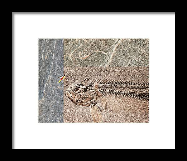 Fossil Framed Print featuring the photograph Fossil Fishing by Stephen Warren