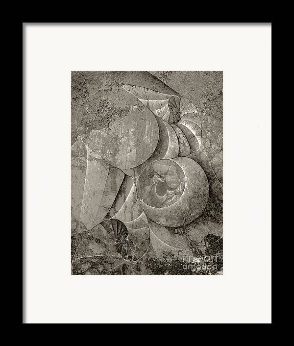 Fossilized Shell Framed Print featuring the digital art Fossilized Shell - B And W by Klara Acel