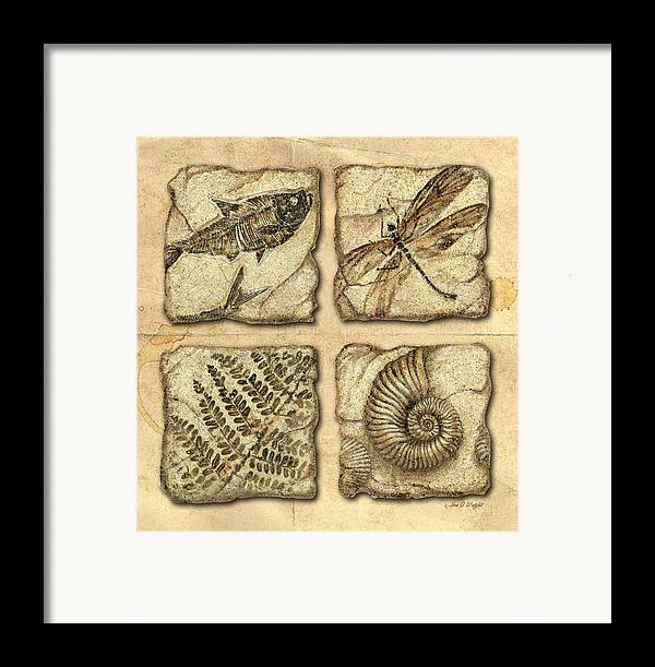 Jon Q Wright Framed Print featuring the painting Fossils by JQ Licensing