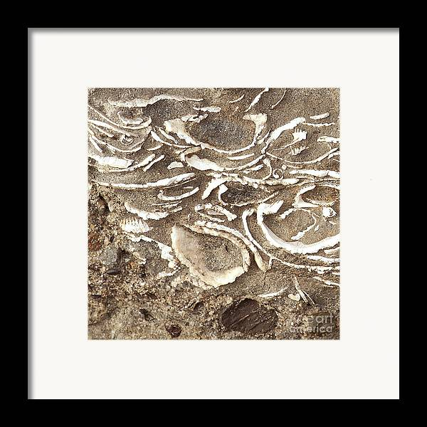 Fossils Framed Print featuring the photograph Fossils Layered In Sand And Rock by Artist and Photographer Laura Wrede