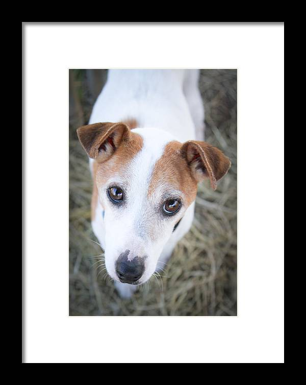 Foster Framed Print featuring the photograph Foster by Soccer Dog Design