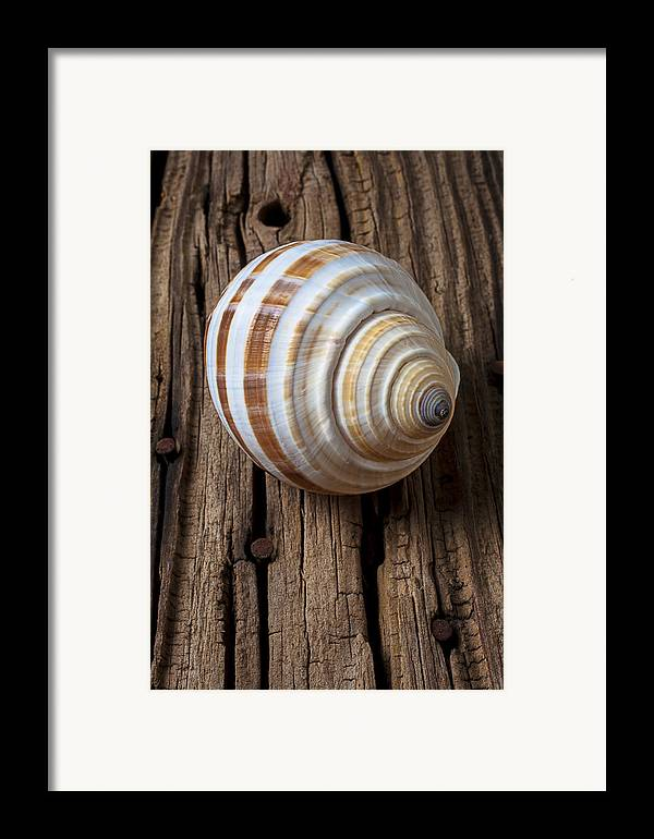 Sea Shell Framed Print featuring the photograph Found Sea Shell by Garry Gay