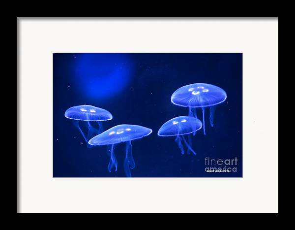 Jelly Fish Framed Print featuring the photograph Four Blue Moon Jellyfish by Artist and Photographer Laura Wrede