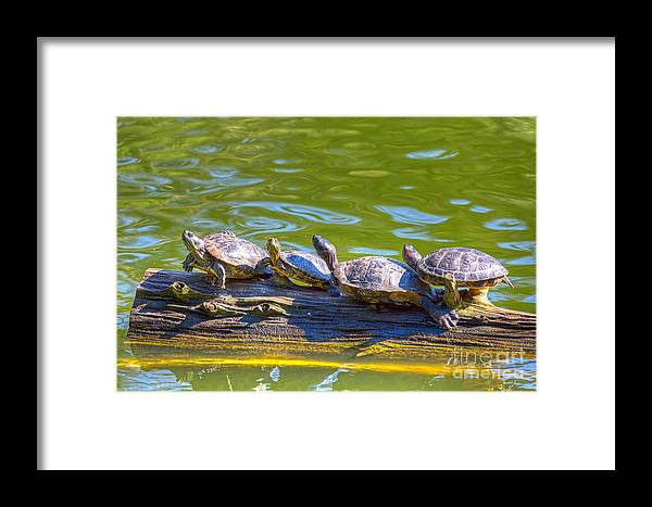 Golden Gate Park Framed Print featuring the photograph Four Turtles by Kate Brown