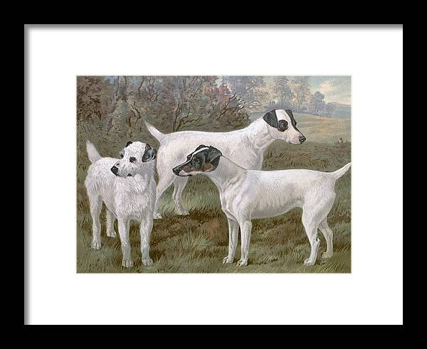 Fox Framed Print featuring the painting Fox Terriers by Charlie Ross