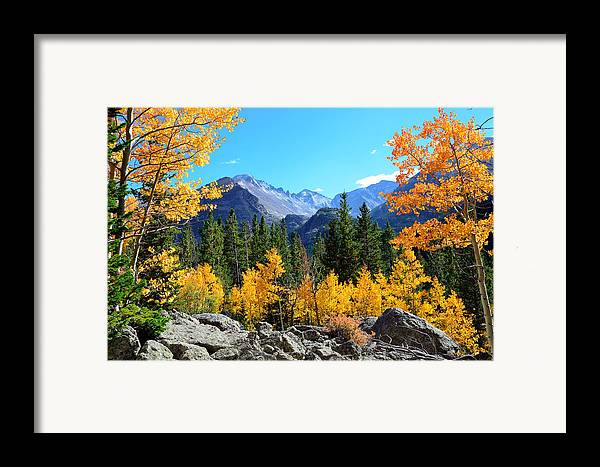 Bear Framed Print featuring the photograph Framed In Gold by Tranquil Light Photography