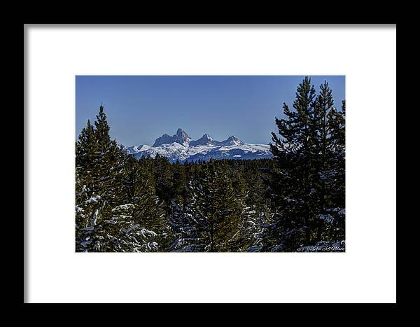 Tetons Framed Print featuring the photograph Framed In The Pines by Jeff Nelson