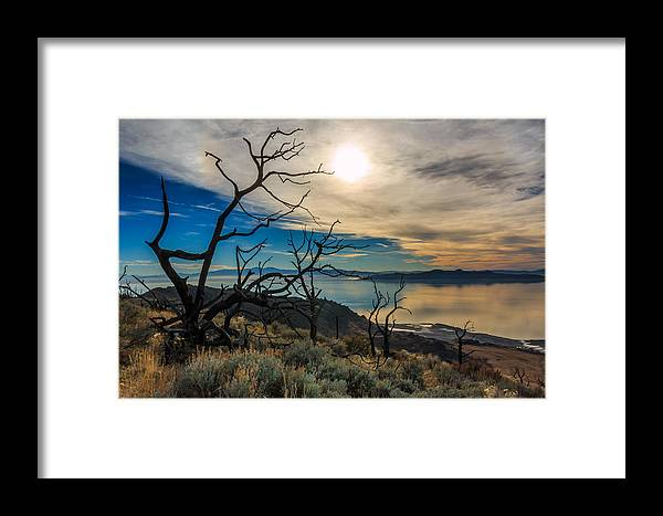 Gigimarie Framed Print featuring the photograph Frary Trail Trees by Gina Herbert