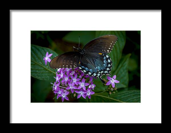 Butterfly Framed Print featuring the photograph Freckles by Louis Rivera