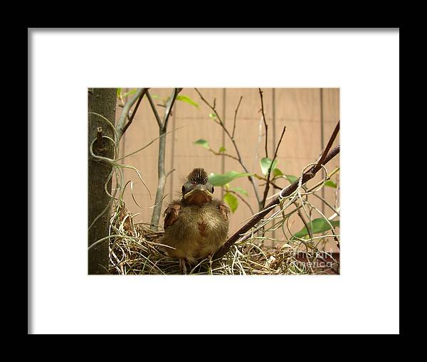 Nature Framed Print featuring the photograph Fred by Nancy Worrell