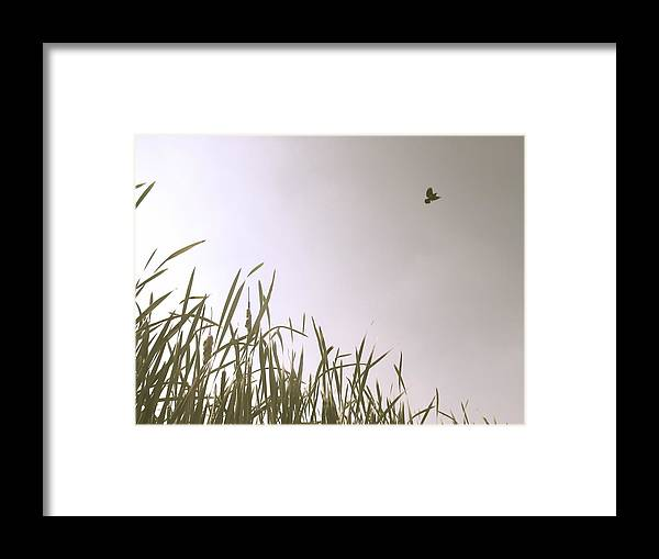 Summer Framed Print featuring the photograph Free by Sarah Leer