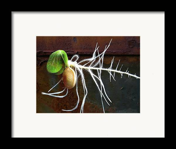 Seeds Framed Print featuring the photograph Free To Be by Shirley Sirois