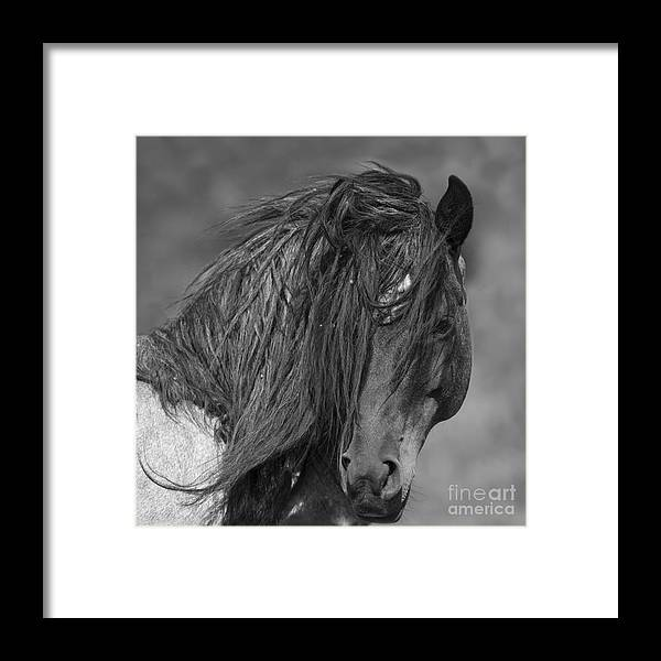 Mustang Framed Print featuring the photograph Freedom Close Up by Carol Walker