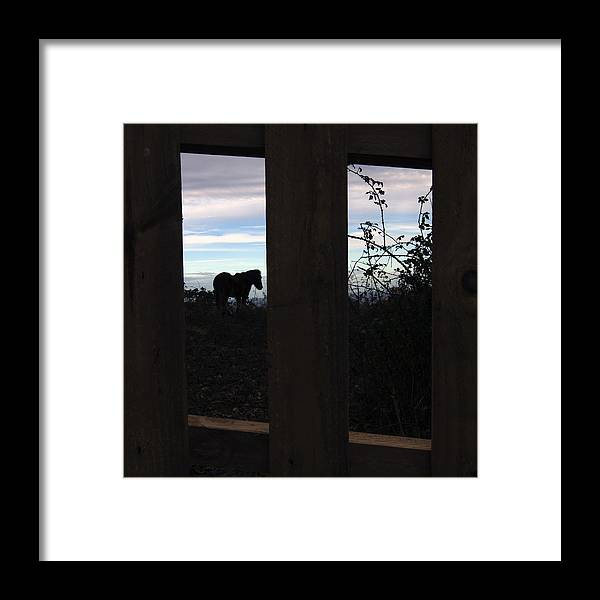 Framed Print featuring the photograph Freedom by Jl Z
