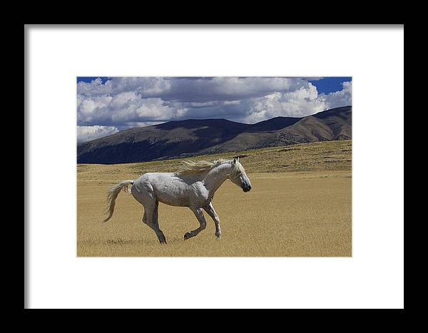 Wild Framed Print featuring the photograph Freedom On The Run by Gene Praag