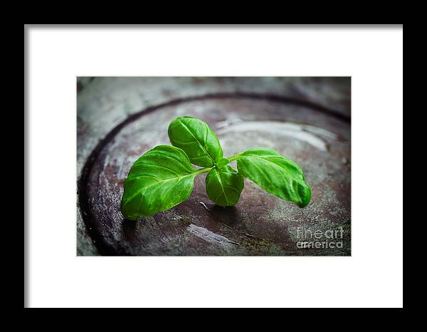 Aroma Framed Print featuring the photograph Fresh Basil by Mythja Photography