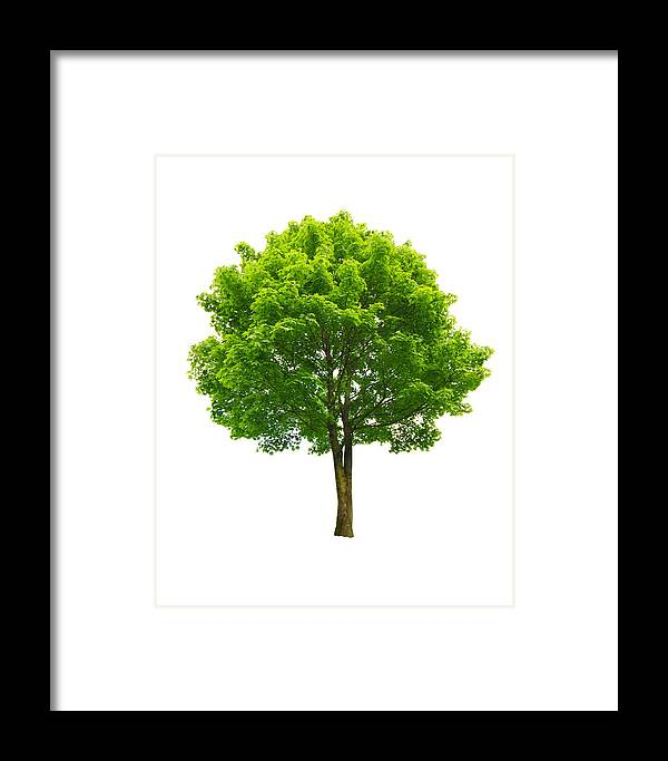 Environment Framed Print featuring the photograph Fresh Lonely Tree by Ioan Panaite