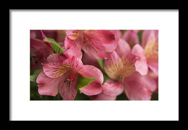 Flowers Framed Print featuring the photograph Fresh by Samantha Schram