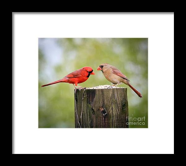 Birds Framed Print featuring the photograph Friends In The Rain by Kerri Farley