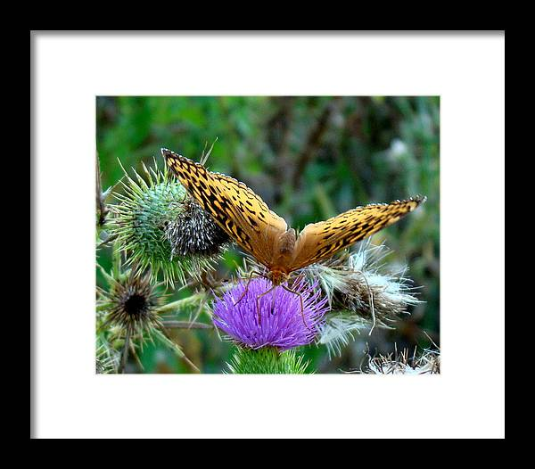 Butterfly Framed Print featuring the photograph Fritillary by Rosanne Jordan