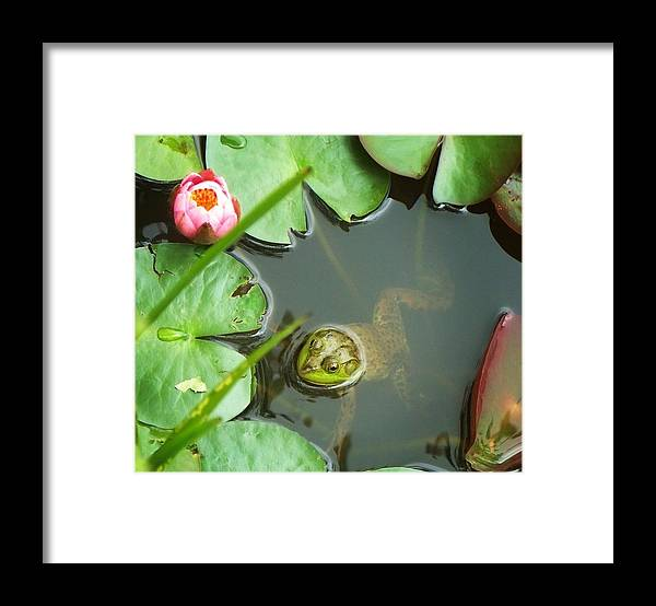 Photograph Framed Print featuring the photograph Frog Among The Lily Pads by Joy Nichols
