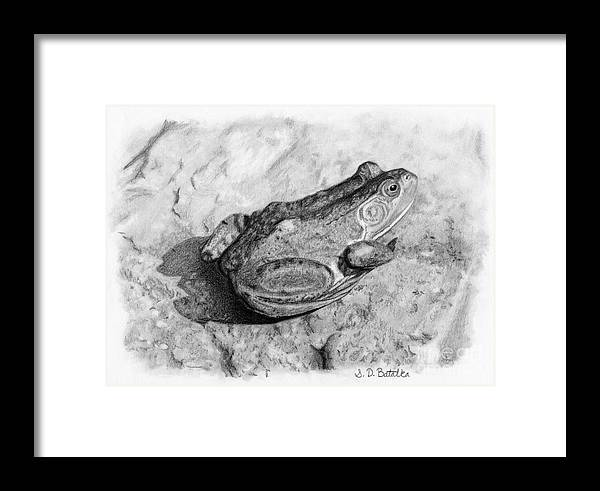 Frog Framed Print featuring the drawing Frog On Rock by Sarah Batalka
