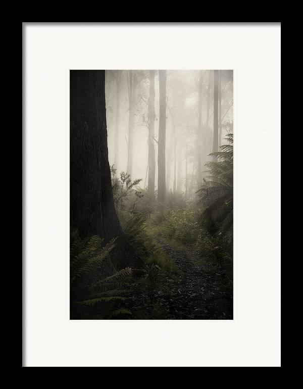 Fog Framed Print featuring the photograph From Darkness by Amy Weiss