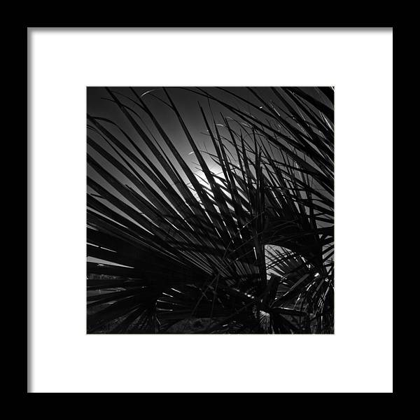 Fronds Framed Print featuring the photograph Fronds by George Taylor