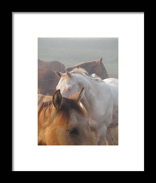 Horses Minnesota Framed Print featuring the photograph Fronts by Kim Eastwood