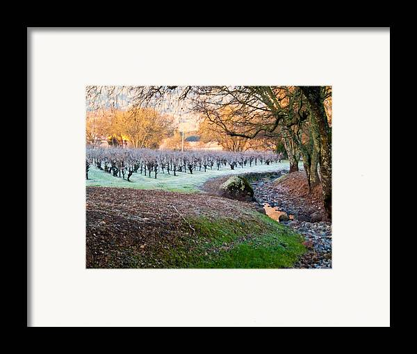 Creek Framed Print featuring the photograph Frost In The Valley by Bill Gallagher