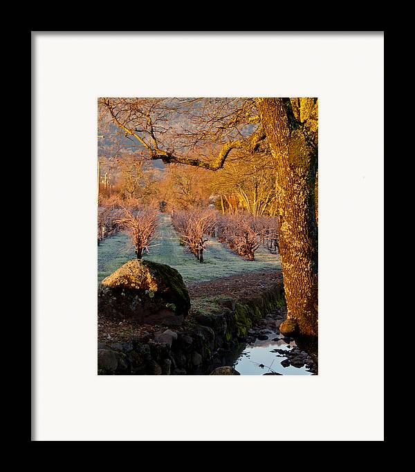 Oak Framed Print featuring the photograph Frost In The Valley Of The Moon by Bill Gallagher