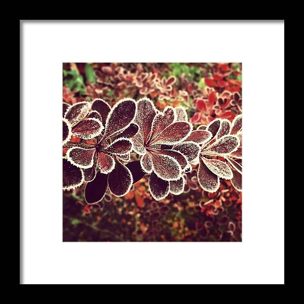 Frost Framed Print featuring the photograph Frost by Illusorium Illustration