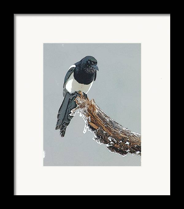 Abstract Framed Print featuring the digital art Frosted Magpie- Abstract by Tim Grams
