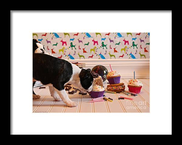 Animal Framed Print featuring the photograph Frosting Feast by Susan Herber