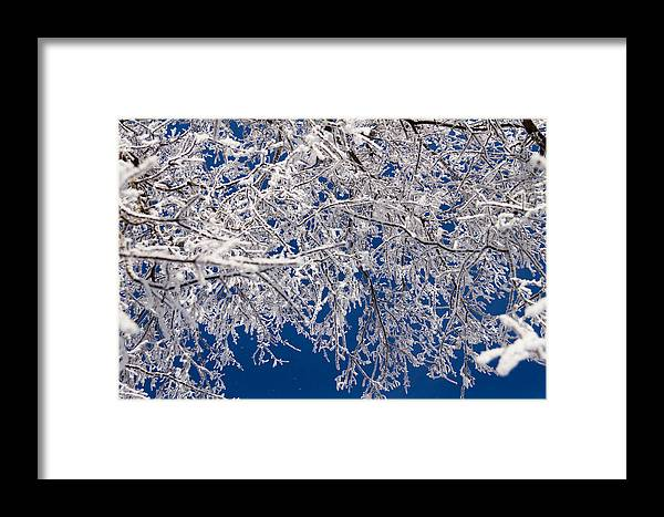 Winter Framed Print featuring the photograph Frosty February Morning by Sharon Marx