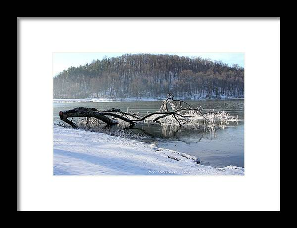 Trees Framed Print featuring the photograph Frozen Tree in Lake by Carolyn Postelwait