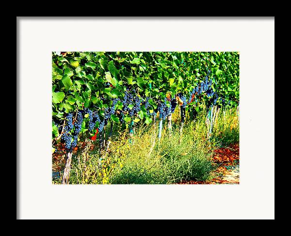 Grapes Framed Print featuring the photograph Fruit Of The Vine by Kay Gilley
