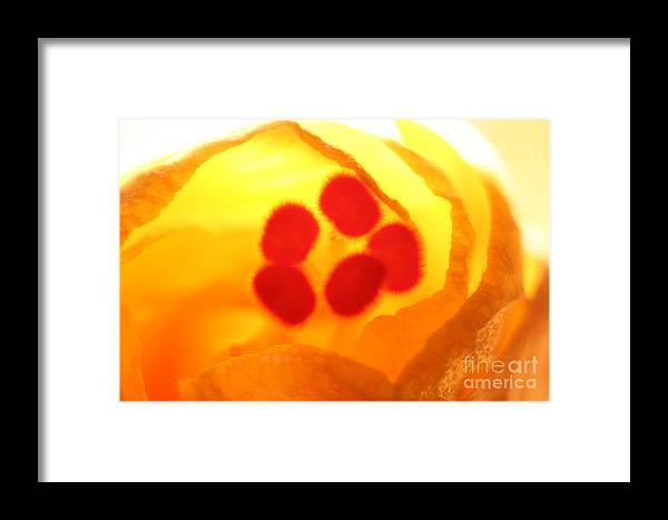Bloom Framed Print featuring the photograph Full Bloom by Ganesh Bhat