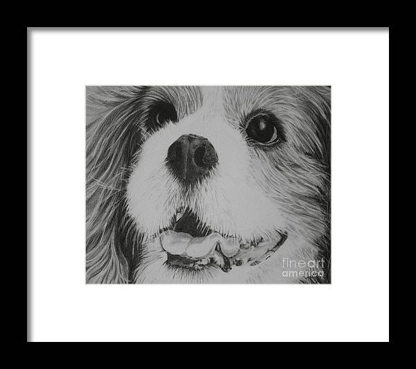 Dog Framed Print featuring the drawing Cavalier by Terri Mills