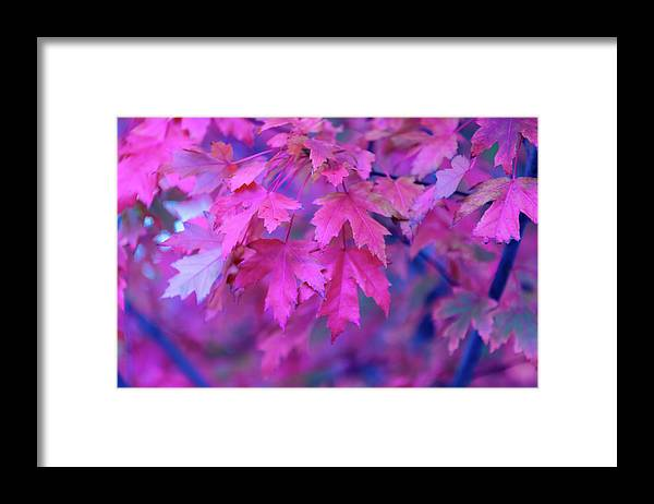Tranquility Framed Print featuring the photograph Full Frame Of Maple Leaves In Pink And by Noelia Ramon - Tellinglife