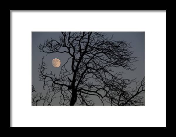 Trees Framed Print featuring the photograph Full Moon Through A Tree Still Standing After A Fire by Scott Lenhart