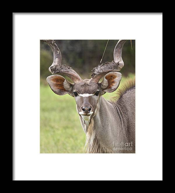 Africa Framed Print featuring the photograph Fun In The Mud by Valerie Johnson