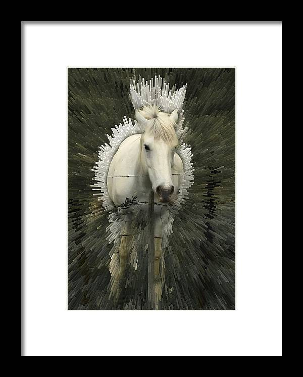Horse Framed Print featuring the photograph Fun With Extrude Tool by Jim Painter
