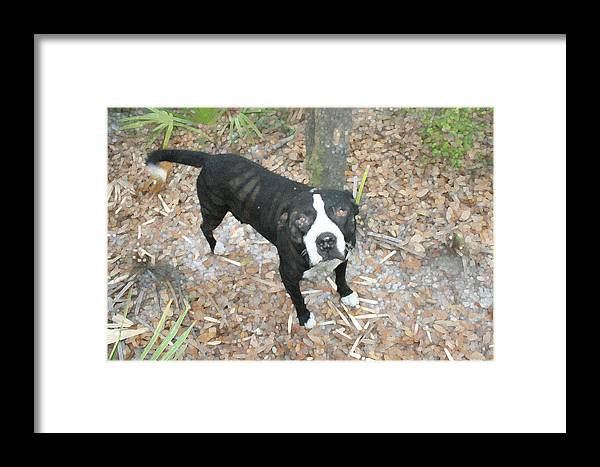 Animal Framed Print featuring the photograph Fundamental Dog by Bob Richter