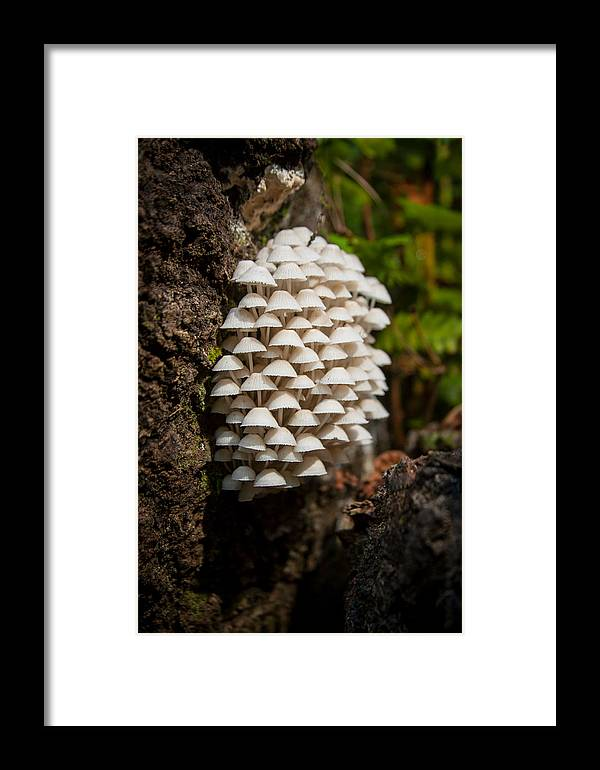 Fungi Framed Print featuring the photograph Fungal Gathering by W Chris Fooshee