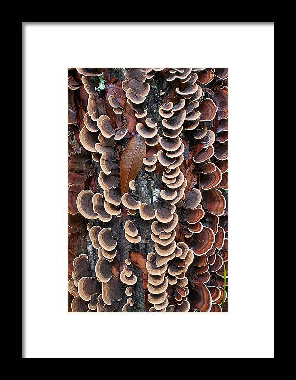 Fungi Framed Print featuring the photograph Fungi On Log by W Chris Fooshee