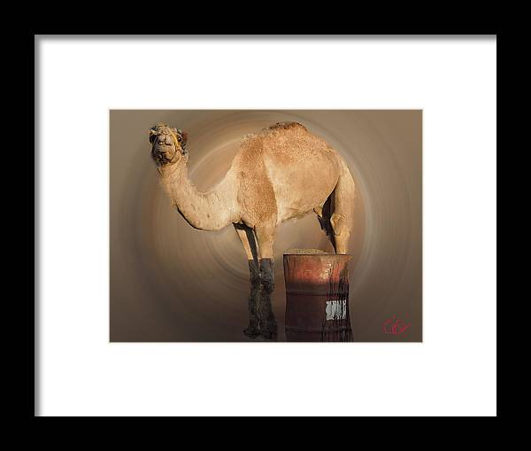 Colette Framed Print featuring the photograph Funny Beduin Camel Talk by Colette V Hera Guggenheim