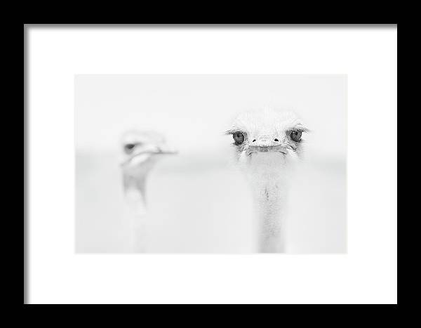 Ostrich Framed Print featuring the photograph Funny Ostrich by Carlo Tonti