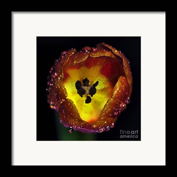 Photography Framed Print featuring the photograph Furnace In A Tulip 2 by Kaye Menner